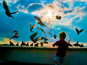 clouds_sun_birds_children_chai_1280x960_wallpaperhi.com