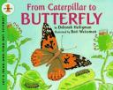 from-cateroillar-to-butterfly-300×241.jpg