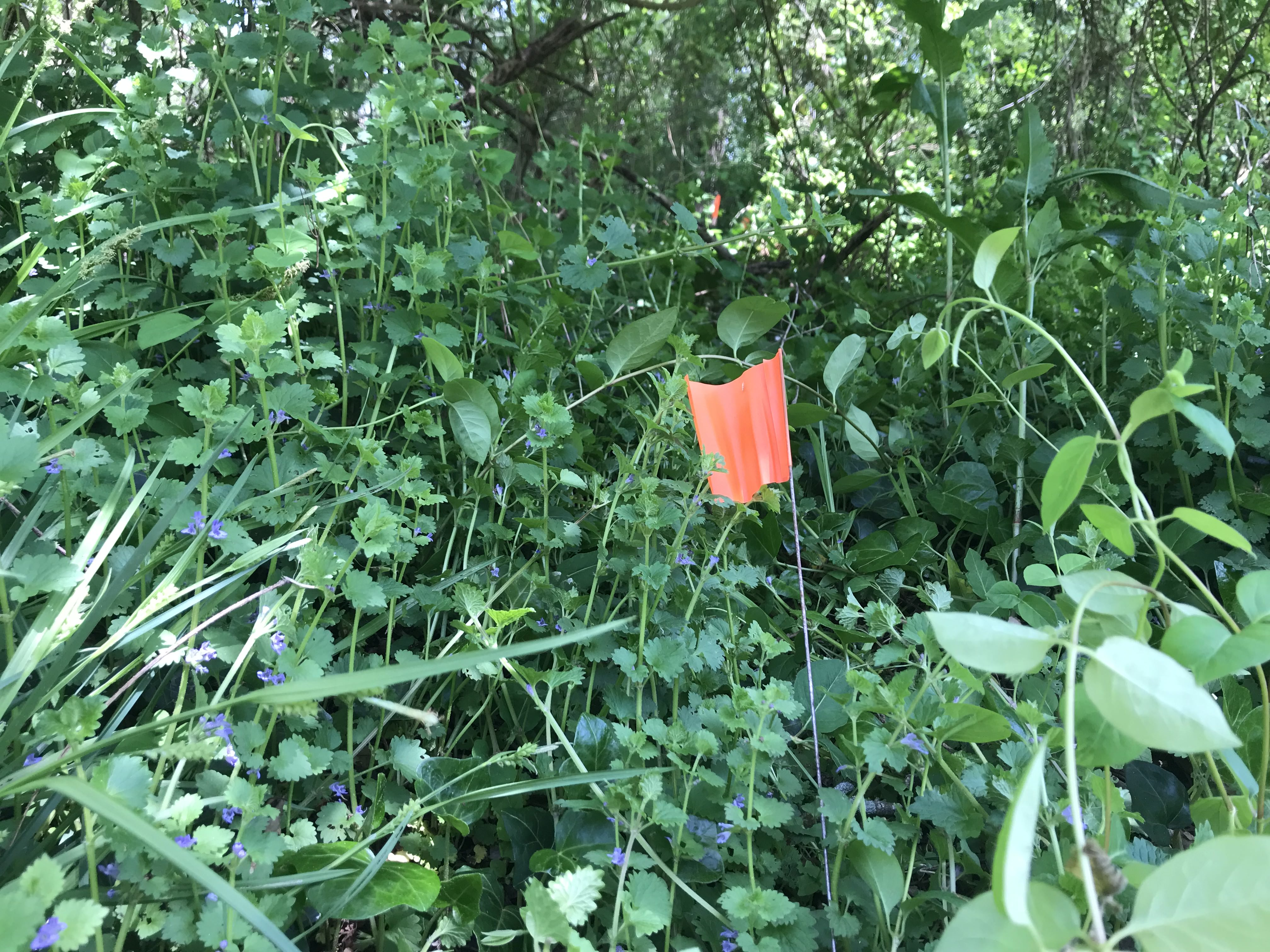 Image of an orange flag staked into ground.