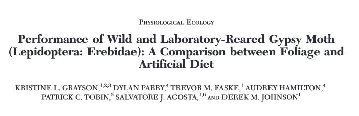 Diet v Foliage paper