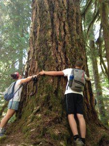 Old trees means huge trunks!