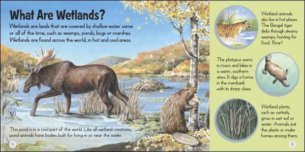 wetlandspread.jpg