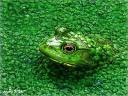 animal-camouflage-18.jpg
