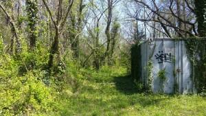 evergreen dumpster